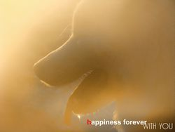 Happiness forever whith you