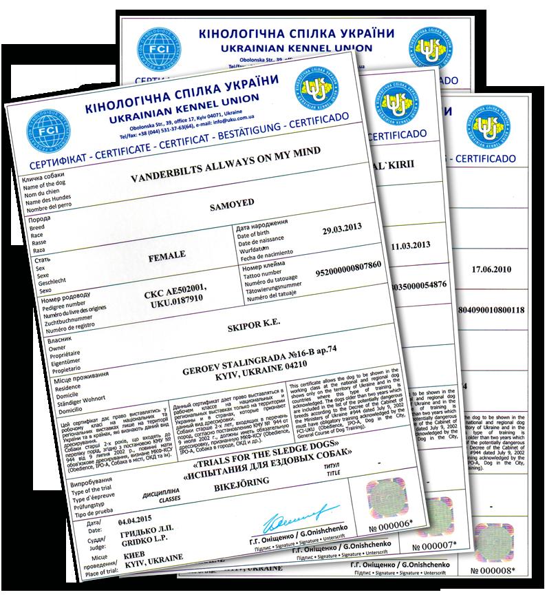 Сертификаты по ездовому спорту